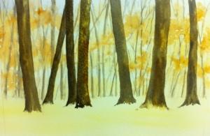 Woodland Scene (6)