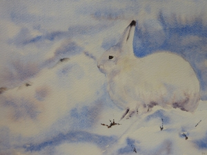 Artic Hare by Tessa Lewis