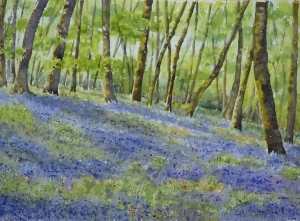 Bluebells Woods in Watercolour