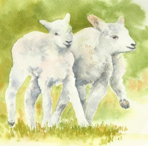Young Lambs